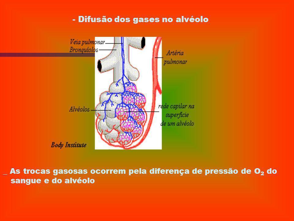 5) REVISÃO FISIOLÓGICA FISIOLOGIA DO SISTEMA RESPIRATÓRIO - Difusão dos gases O2 e CO2
