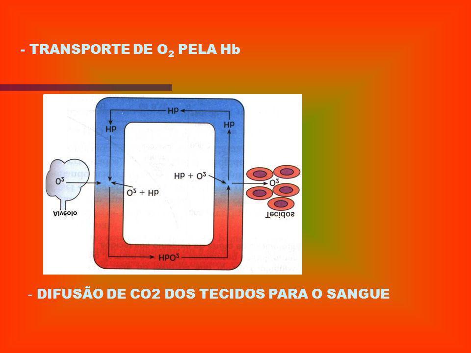 - Difusão dos gases no alvéolo _ As trocas gasosas ocorrem pela diferença de pressão de O 2 do sangue e do alvéolo