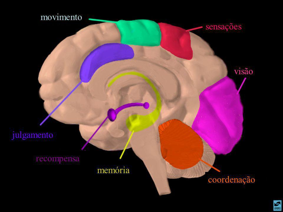 movimento sensações visão coordenação memória recompensa julgamento