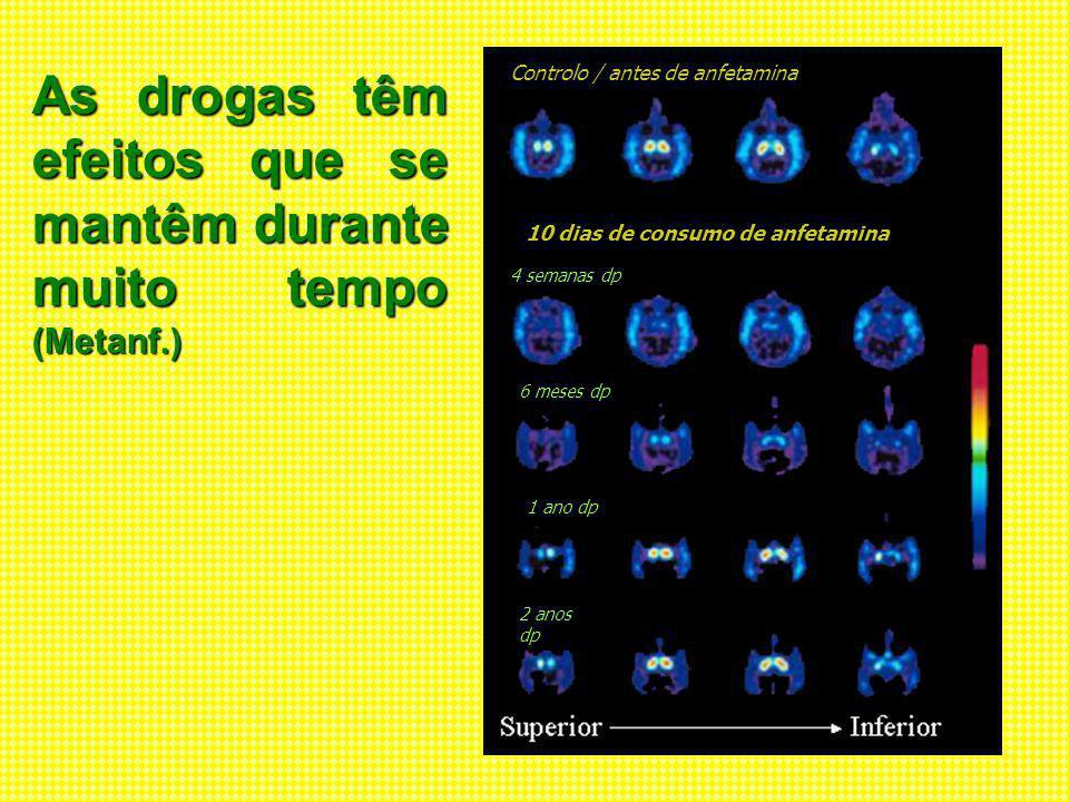 The Memory of Drugs Nature Video Vídeo - Cocaina Front of Brain Back of Brain Amgdala em repouso Amigdala activada Reg.