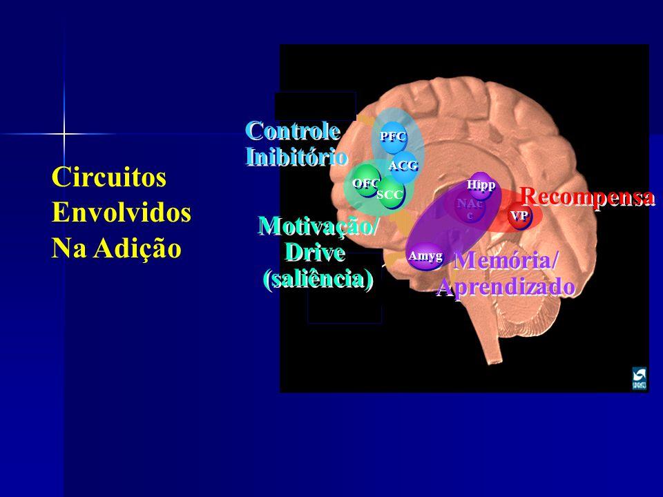 OFC SCC NAc c VP Recompensa PFC ACG Controle Inibitório Controle Inibitório Motivação/ Drive (saliência) Motivação/ Drive (saliência) Hipp Amyg Memóri