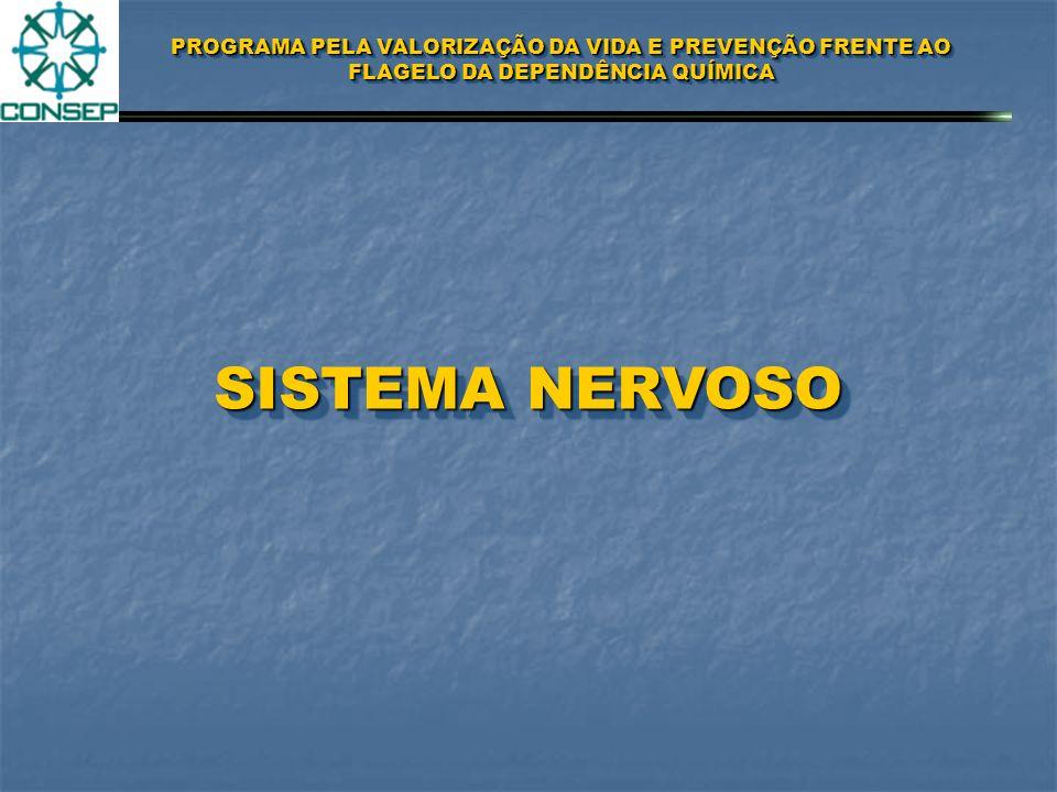 PROGRAMA PELA VALORIZAÇÃO DA VIDA E PREVENÇÃO FRENTE AO FLAGELO DA DEPENDÊNCIA QUÍMICA SISTEMA NERVOS AUTONOMA SNA SISTEMA NERVOSO CENTRAL SNC SISTEMA NERVOSO PERIFÉRICO SNP NEURÔNIOSNEURÔNIOS AXÔNIOAXÔNIO CORPO DAS CÉLULAS SINAPSESSINAPSES NEUROTRANSMISSORESNEUROTRANSMISSORES DOPAMINADOPAMINA ADRENALINAADRENALINA ACETILCOLINAACETILCOLINA SEROTONINASEROTONINA META-ENCEFALINAMETA-ENCEFALINA NOROPINEFRINANOROPINEFRINA METABOLISMOMETABOLISMO PSICOATIVAPSICOATIVA PSICOTRÓPICAPSICOTRÓPICA
