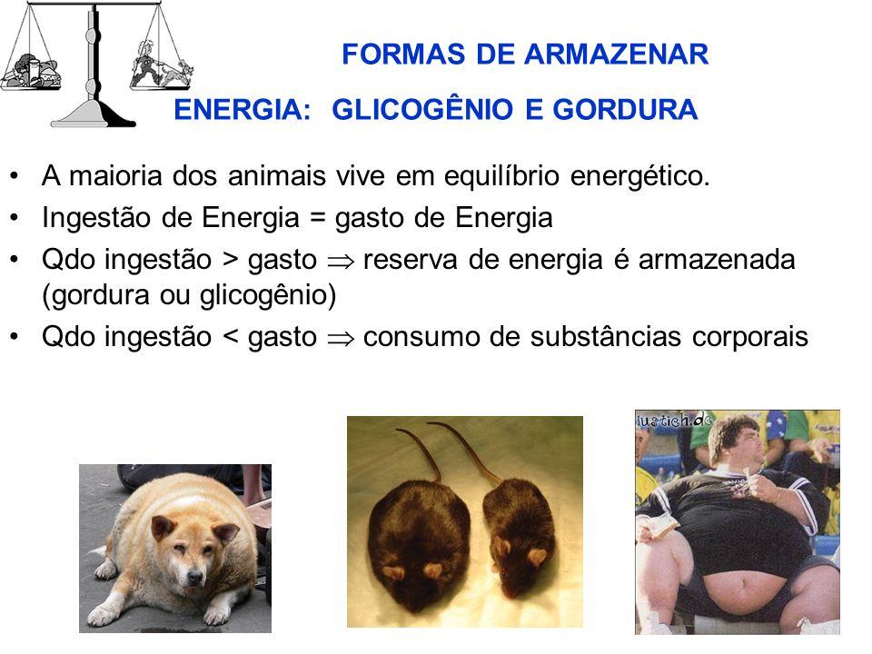 FORMAS DE ARMAZENAR ENERGIA: GLICOGÊNIO E GORDURA A maioria dos animais vive em equilíbrio energético. Ingestão de Energia = gasto de Energia Qdo inge