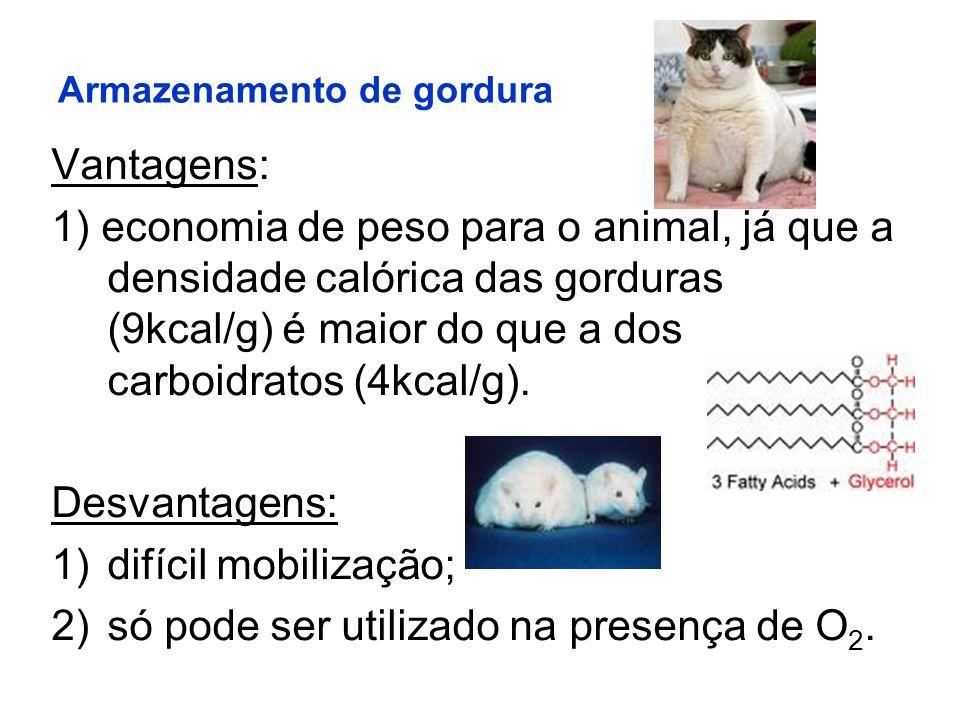 Armazenamento de gordura Vantagens: 1) economia de peso para o animal, já que a densidade calórica das gorduras (9kcal/g) é maior do que a dos carboid