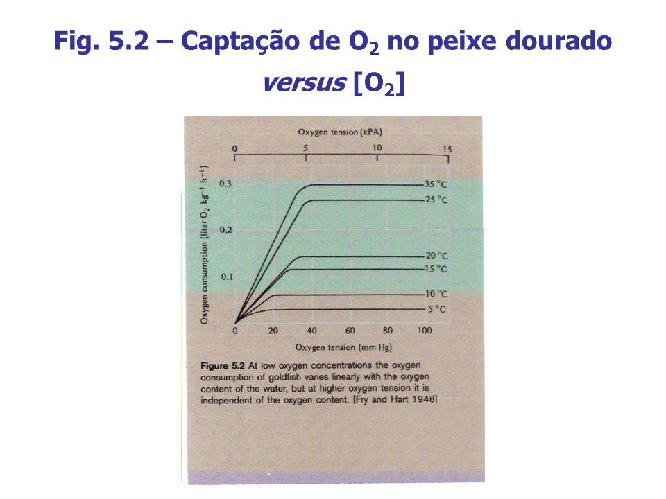 Fig. 5.2 – Captação de O 2 no peixe dourado versus [O 2 ]
