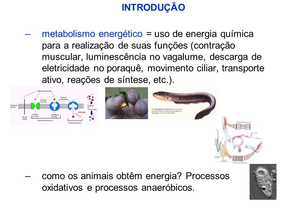 INTRODUÇÃO –metabolismo energético = uso de energia química para a realização de suas funções (contração muscular, luminescência no vagalume, descarga