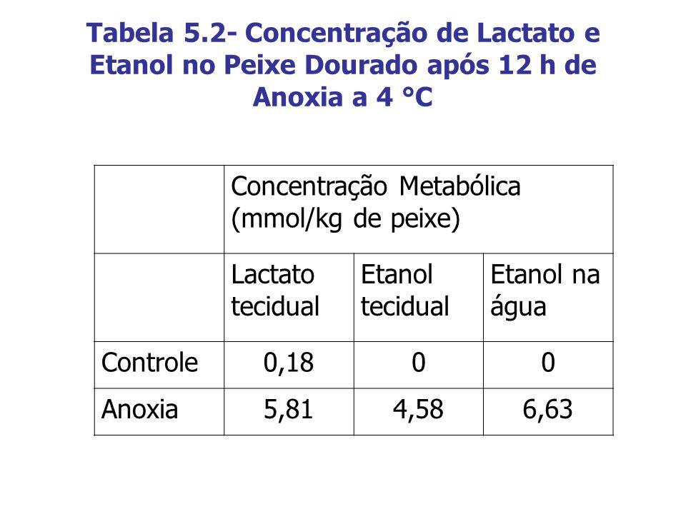 Tabela 5.2- Concentração de Lactato e Etanol no Peixe Dourado após 12 h de Anoxia a 4 °C Concentração Metabólica (mmol/kg de peixe) Lactato tecidual E