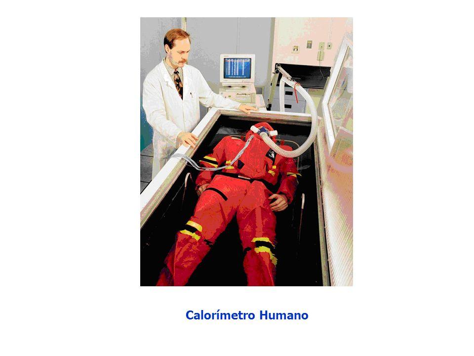 Calorímetro Humano