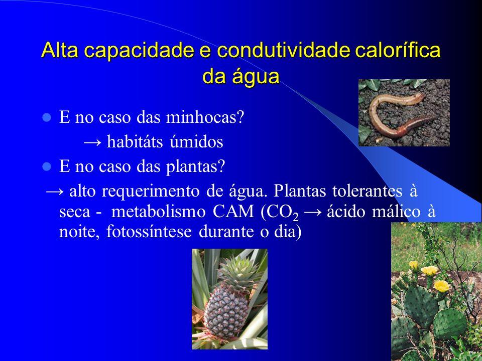 Alta capacidade e condutividade calorífica da água E no caso das minhocas? habitáts úmidos E no caso das plantas? alto requerimento de água. Plantas t