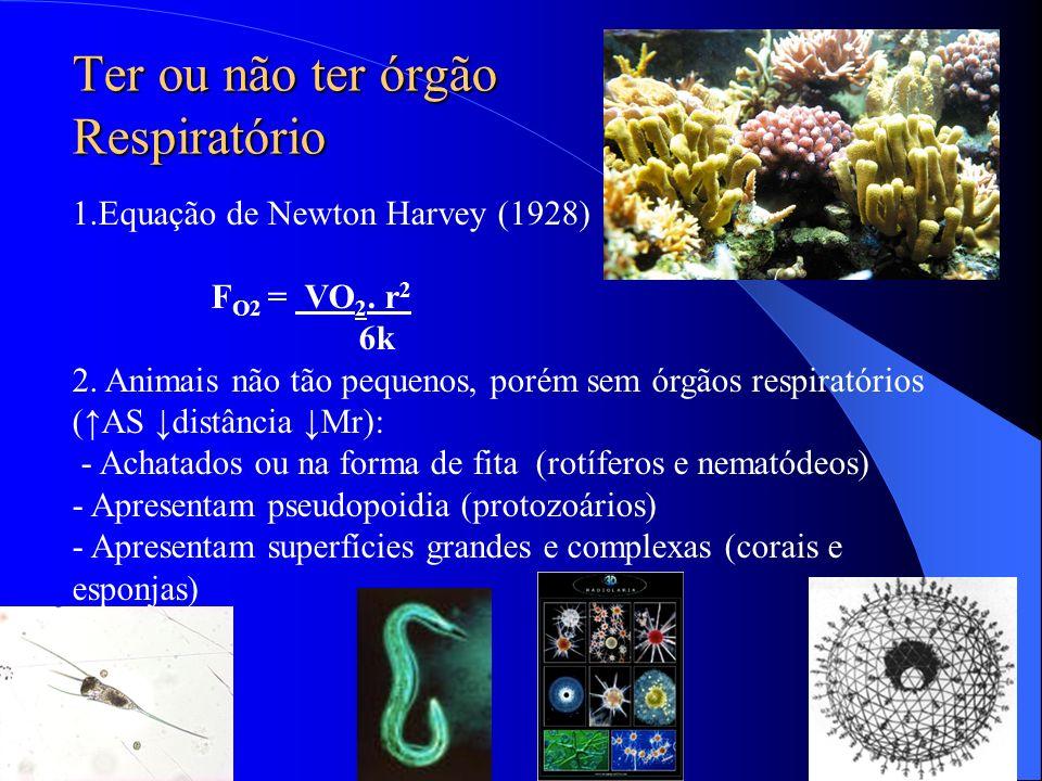 Ter ou não ter órgão Respiratório 1.Equação de Newton Harvey (1928) F O2 = VO 2. r 2 6k 2. Animais não tão pequenos, porém sem órgãos respiratórios (A