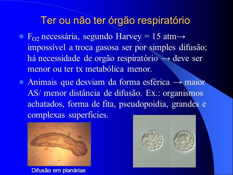Ter ou não ter órgão respiratório F O2 necessária, segundo Harvey = 15 atm impossível a troca gasosa ser por simples difusão; há necessidade de orgão