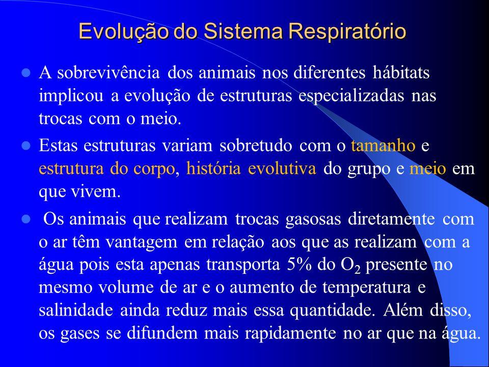 Evolução do Sistema Respiratório A sobrevivência dos animais nos diferentes hábitats implicou a evolução de estruturas especializadas nas trocas com o