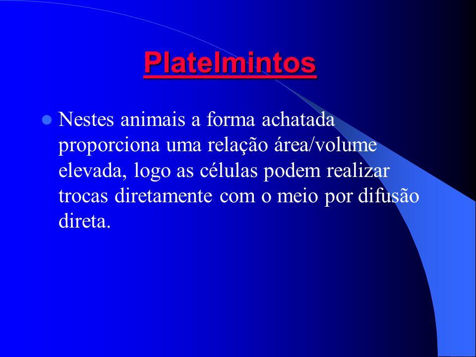 PlatelmintosPlatelmintos Platelmintos Platelmintos Nestes animais a forma achatada proporciona uma relação área/volume elevada, logo as células podem