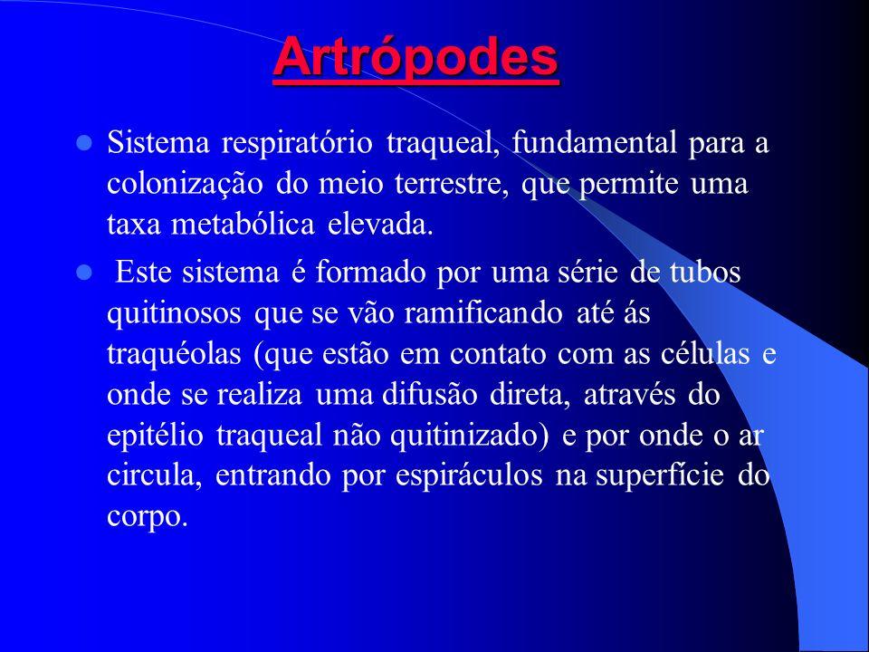 ArtrópodesArtrópodes Artrópodes Artrópodes Sistema respiratório traqueal, fundamental para a colonização do meio terrestre, que permite uma taxa metab