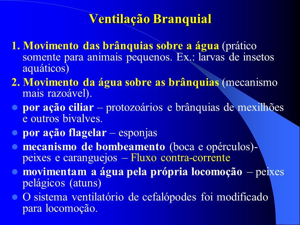 Ventilação Branquial 1. Movimento das brânquias sobre a água (prático somente para animais pequenos. Ex.: larvas de insetos aquáticos) 2. Movimento da