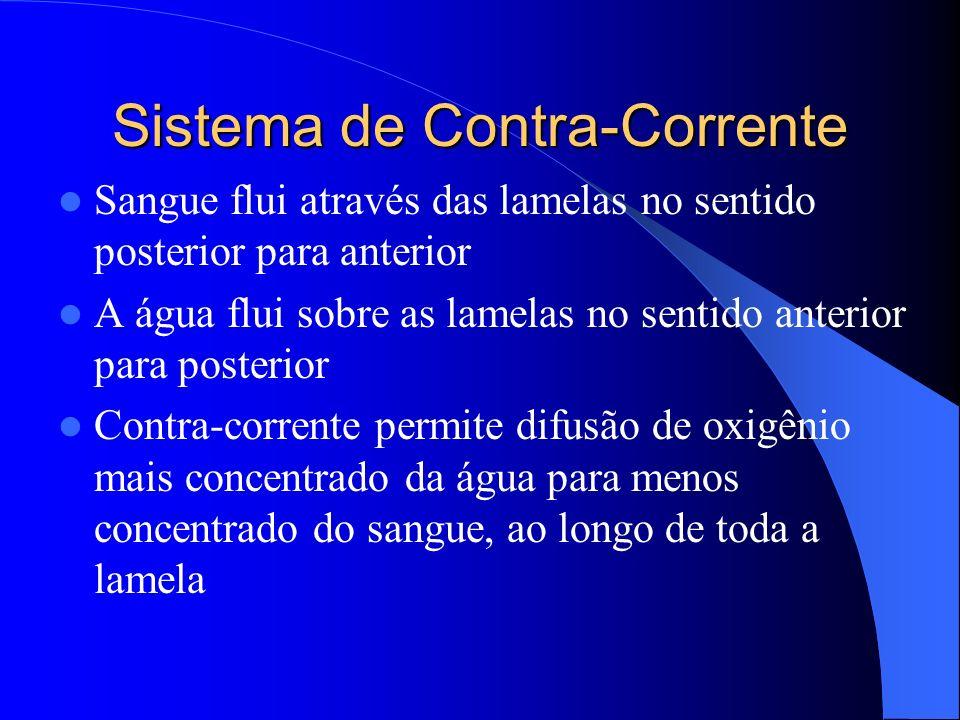 Sistema de Contra-Corrente Sangue flui através das lamelas no sentido posterior para anterior A água flui sobre as lamelas no sentido anterior para po