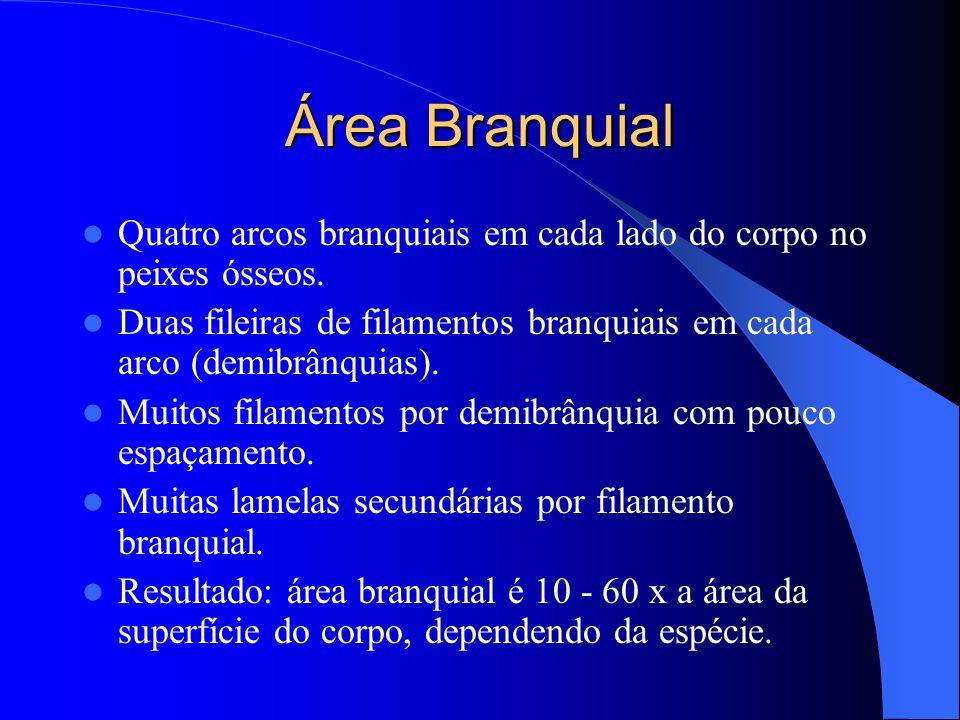 Área Branquial Quatro arcos branquiais em cada lado do corpo no peixes ósseos. Duas fileiras de filamentos branquiais em cada arco (demibrânquias). Mu