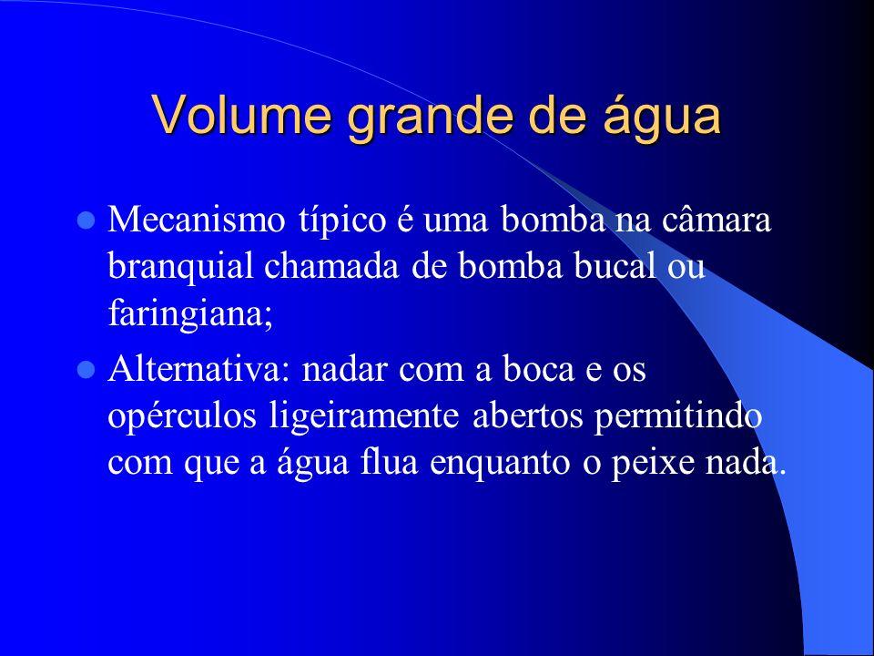Volume grande de água Mecanismo típico é uma bomba na câmara branquial chamada de bomba bucal ou faringiana; Alternativa: nadar com a boca e os opércu
