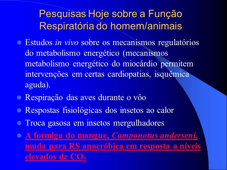 Pesquisas Hoje sobre a Função Respiratória do homem/animais Estudos in vivo sobre os mecanismos regulatórios do metabolismo energético (mecanismos met