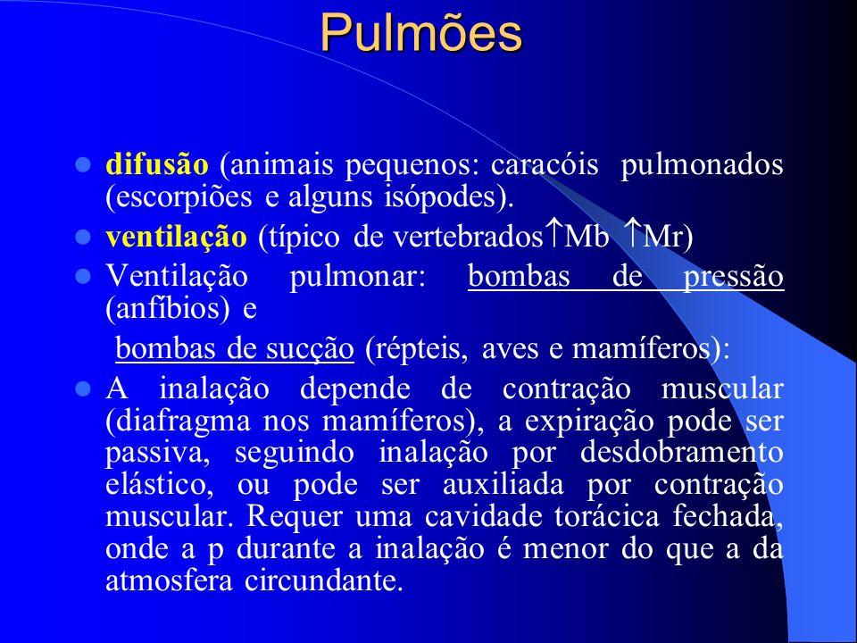 Pulmões difusão (animais pequenos: caracóis pulmonados (escorpiões e alguns isópodes). ventilação (típico de vertebrados Mb Mr) Ventilação pulmonar: b