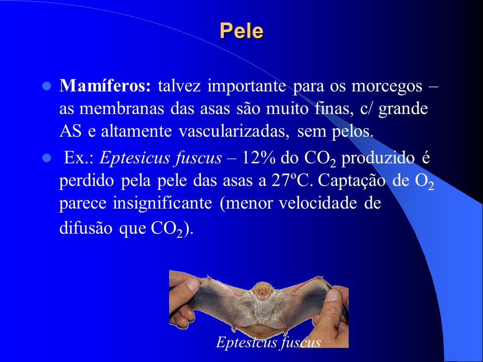 Pele Mamíferos: talvez importante para os morcegos – as membranas das asas são muito finas, c/ grande AS e altamente vascularizadas, sem pelos. Ex.: E