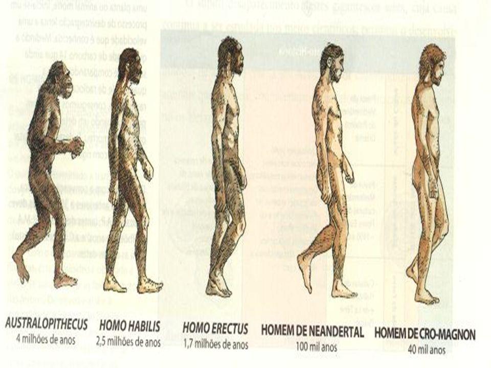 Foi na África que o ancestral mais longínquo do homem passou a ser bípede, isto é, assumiu a postura vertical, firmando- se sobre os dois pés. Após um