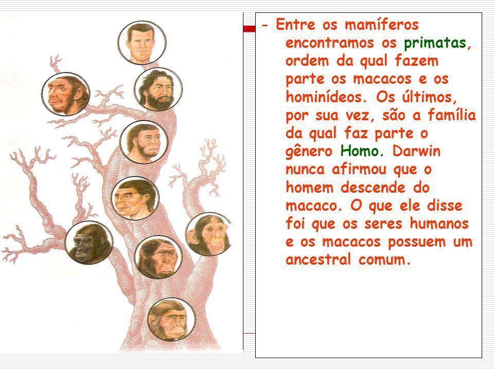 Em sua trajetória, os primeiros seres humanos eram nômades, caçavam, pescavam e faziam a coleta de frutas e raízes comestíveis.