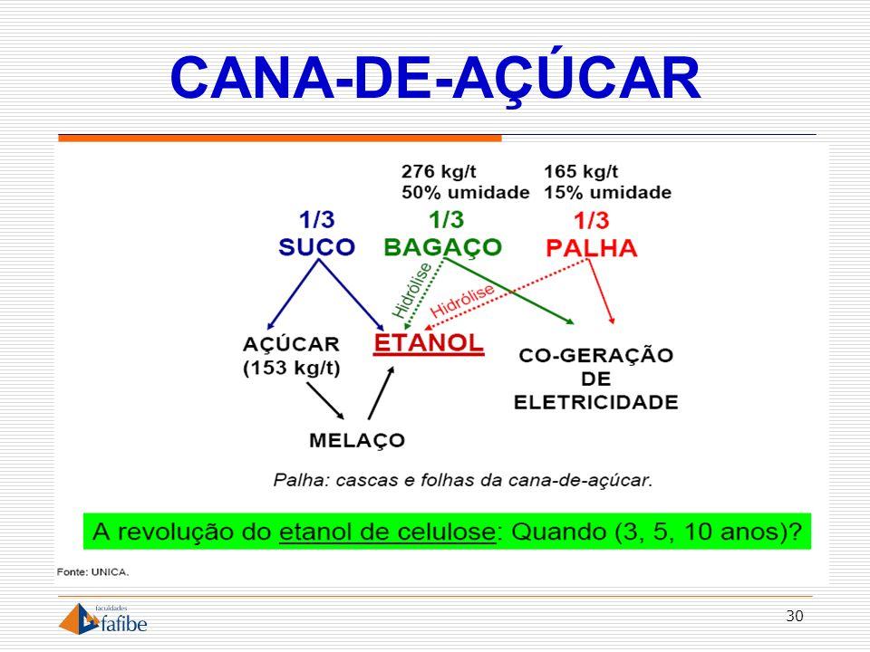 CANA-DE-AÇÚCAR 30