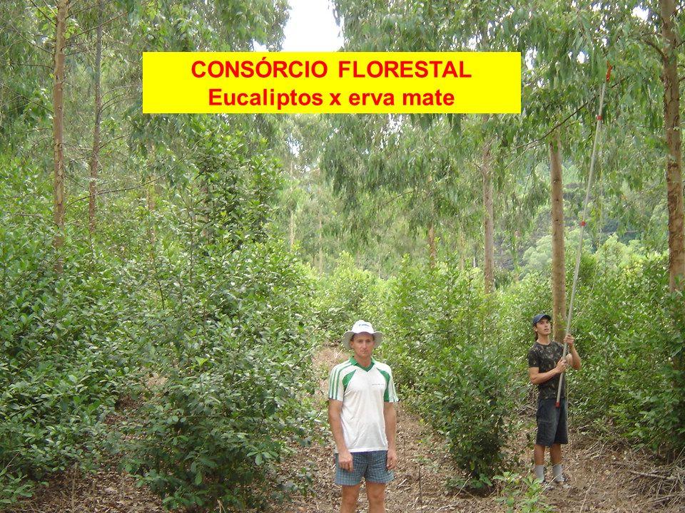 AGEF As pequenas propriedades familiares devem receber uma compensação pela preservação e conservação florestal, pois realizam serviços ambientais em beneficio a toda sociedade.