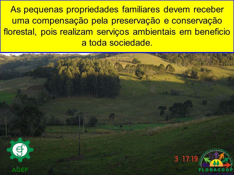 AGEF As pequenas propriedades familiares devem receber uma compensação pela preservação e conservação florestal, pois realizam serviços ambientais em