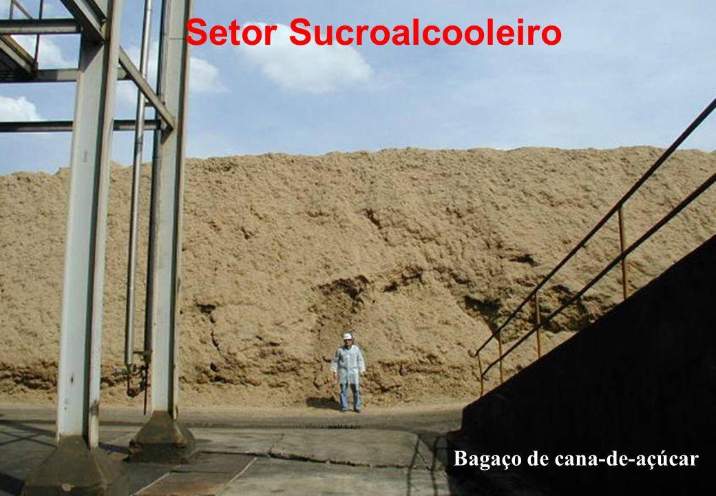 Bagaço de cana-de-açúcar Setor Sucroalcooleiro