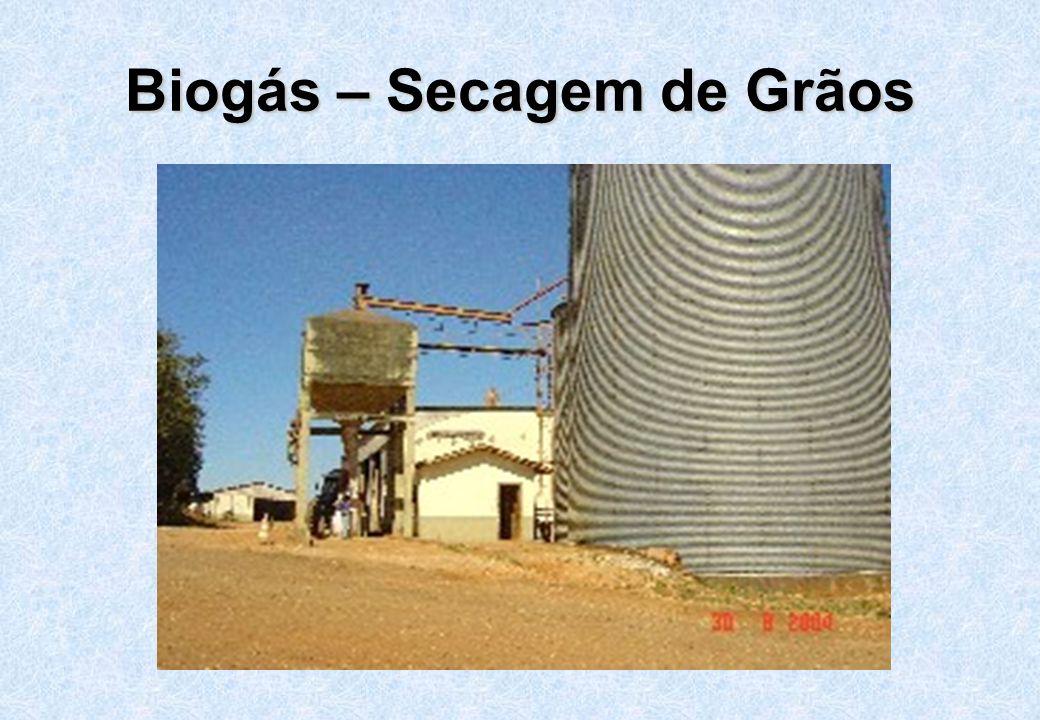Biogás – Secagem de Grãos