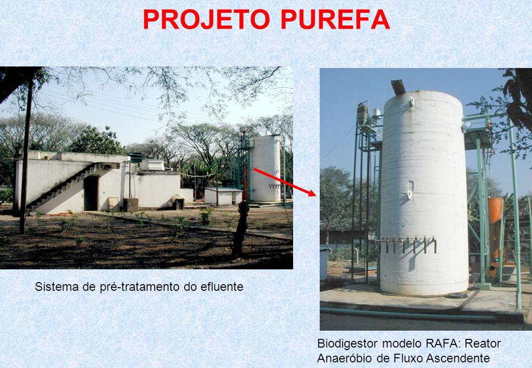 PROJETO PUREFA Sistema de pré-tratamento do efluente Biodigestor modelo RAFA: Reator Anaeróbio de Fluxo Ascendente