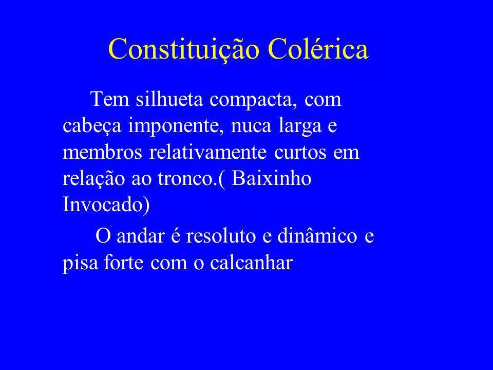 Constituição Colérica Tem silhueta compacta, com cabeça imponente, nuca larga e membros relativamente curtos em relação ao tronco.( Baixinho Invocado)