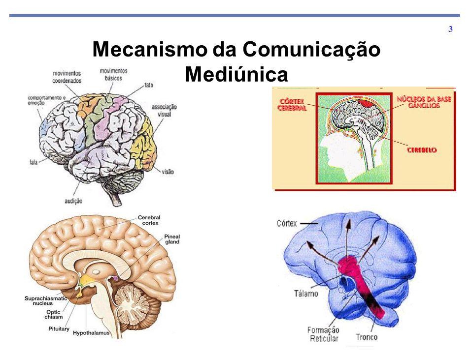 14 Sabemos que os nossos órgãos dos sentidos como ouvidos, olhos, etc., estão condicionados pela natureza, a fim de perceberem as vibrações dentro de um certo limite.