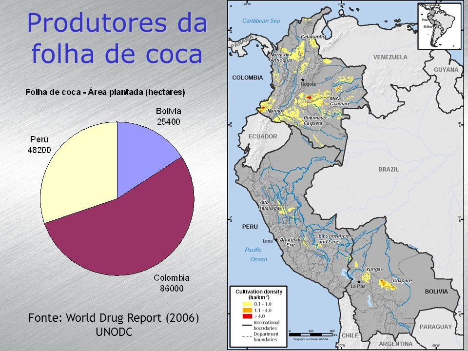 Produtores da folha de coca Fonte: World Drug Report (2006) UNODC