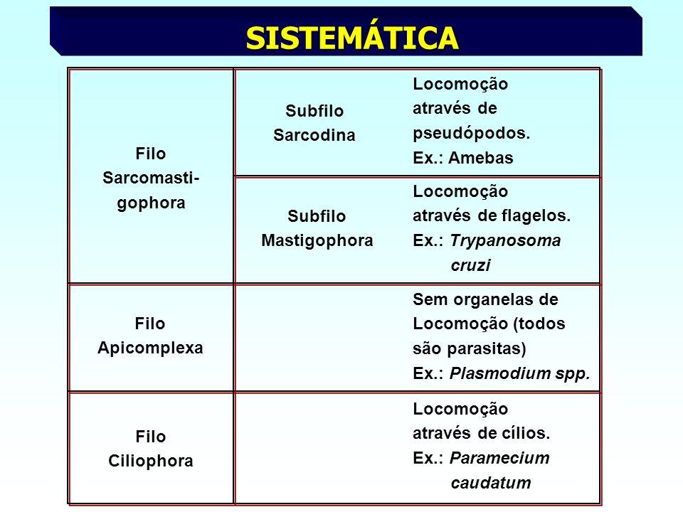 SISTEMÁTICA Subfilo Sarcodina Locomoção através de pseudópodos. Ex.: Amebas Filo Sarcomasti- gophora Subfilo Mastigophora Locomoção através de flagelo