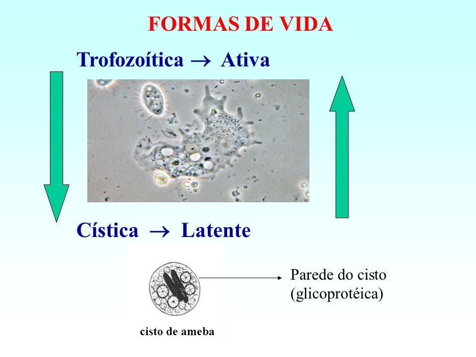 FORMAS DE VIDA Trofozoítica Ativa Cística Latente cisto de ameba Parede do cisto (glicoprotéica)