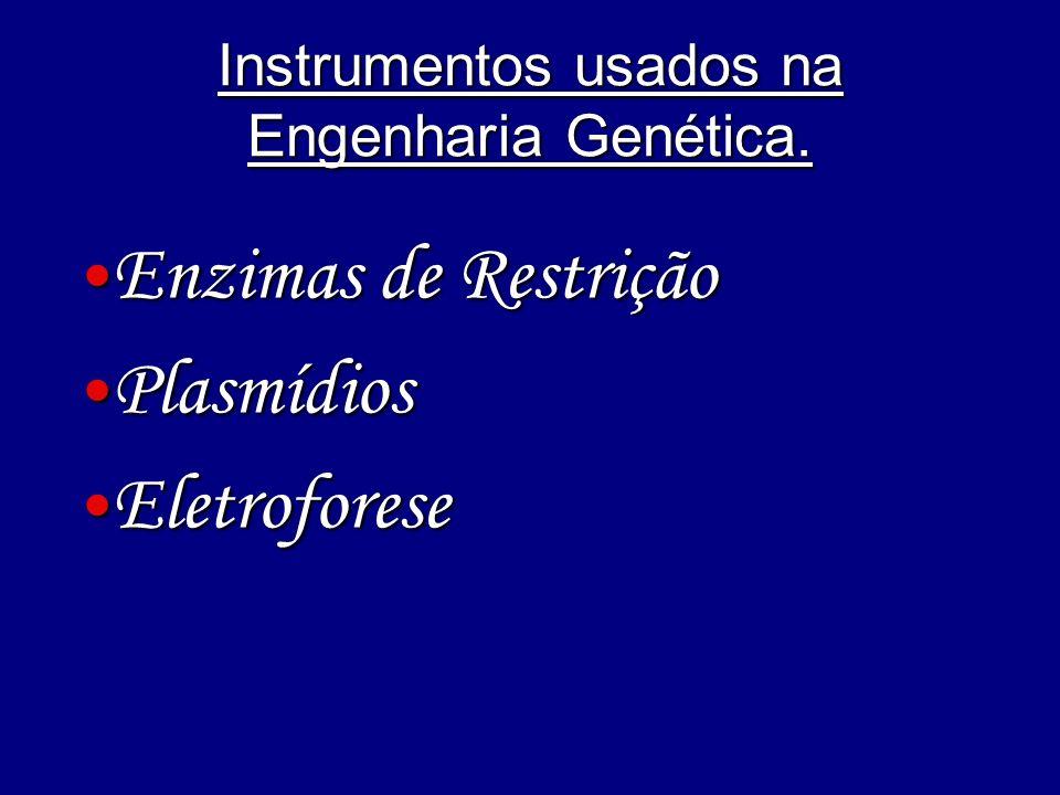 Instrumentos usados na Engenharia Genética. Enzimas de Restrição Enzimas de Restrição Plasmídios Plasmídios Eletroforese Eletroforese