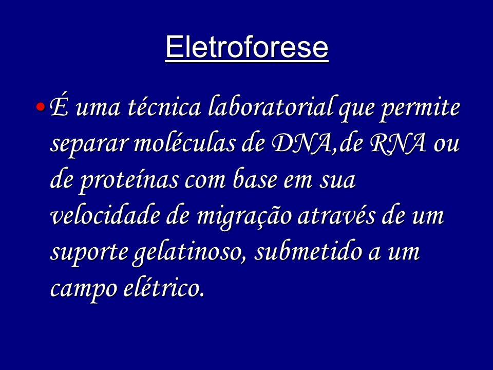 Eletroforese É uma técnica laboratorial que permite separar moléculas de DNA,de RNA ou de proteínas com base em sua velocidade de migração através de