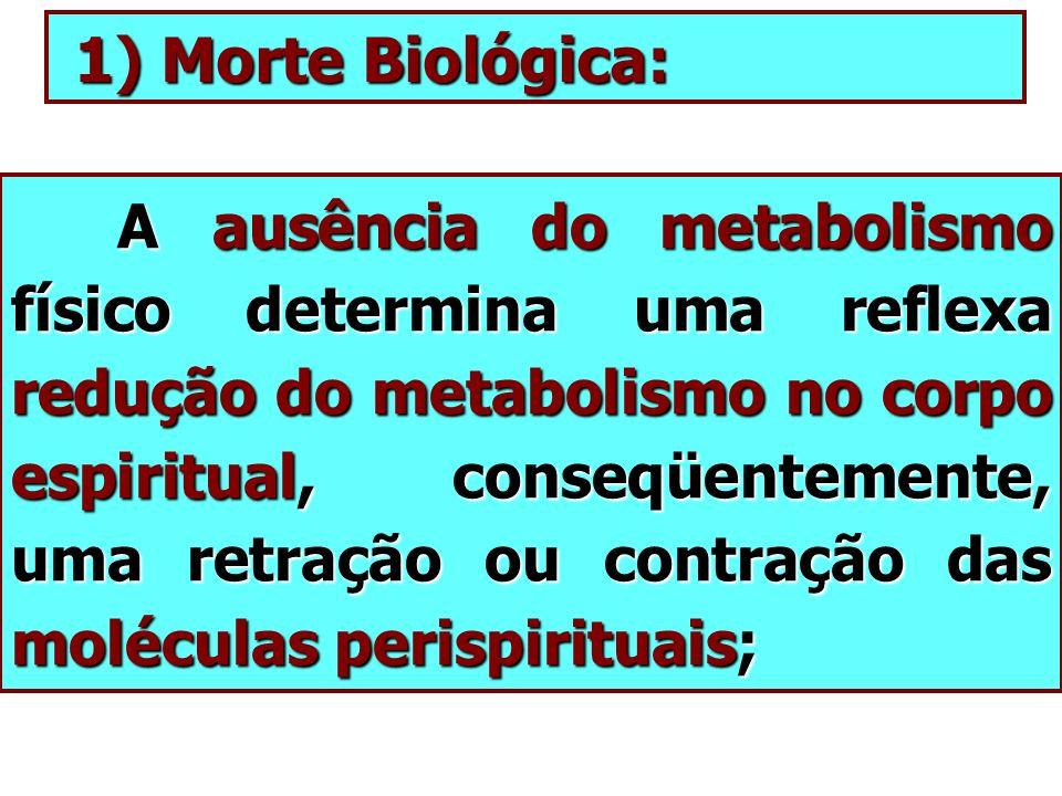 1) Morte Biológica: 1) Morte Biológica: A ausência do metabolismo físico determina uma reflexa redução do metabolismo no corpo espiritual, conseqüente