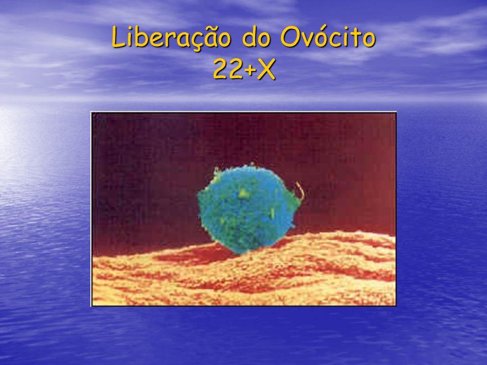 Liberação do Ovócito 22+X