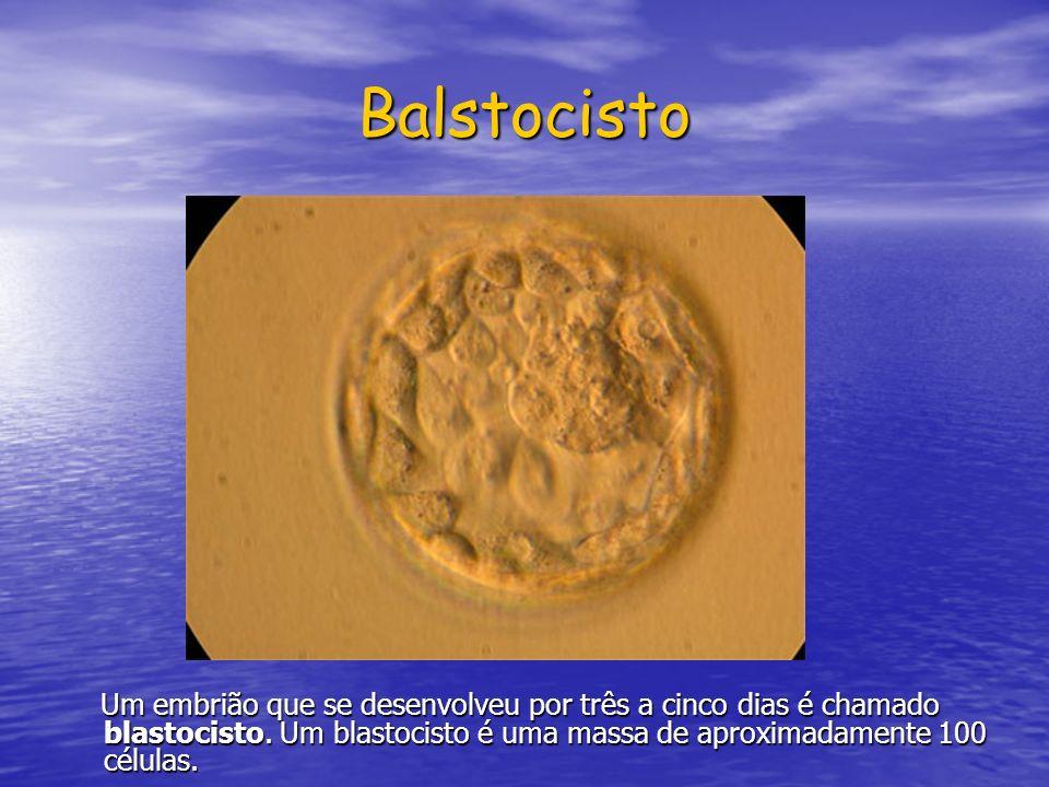 Balstocisto Um embrião que se desenvolveu por três a cinco dias é chamado blastocisto. Um blastocisto é uma massa de aproximadamente 100 células. Um e