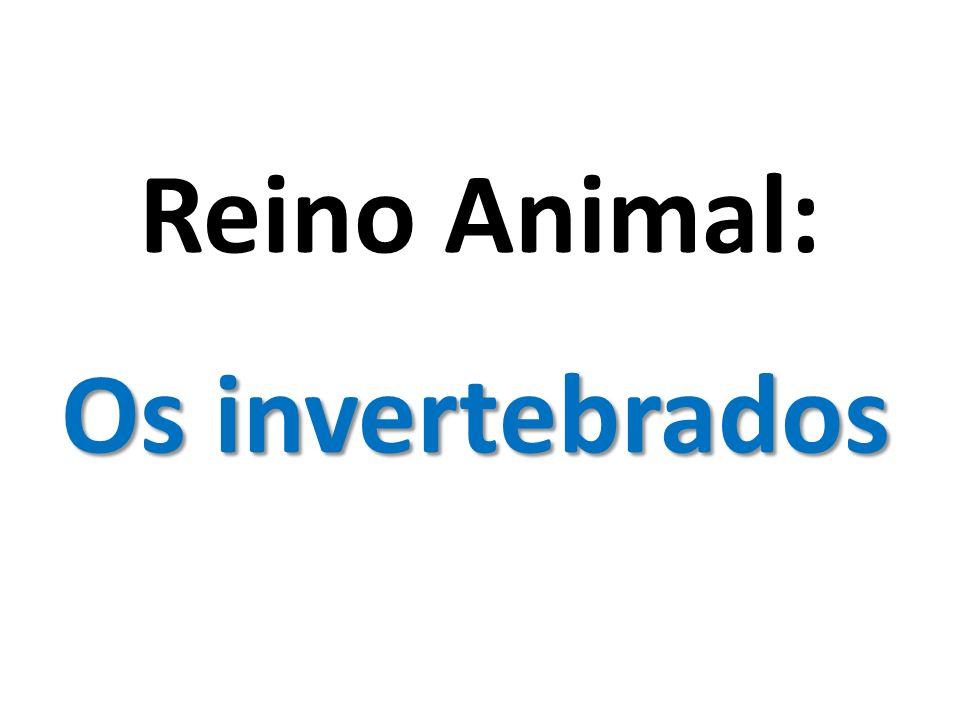Reino Animal: Os invertebrados