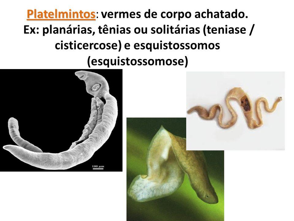 Platelmintos Platelmintos: vermes de corpo achatado. Ex: planárias, tênias ou solitárias (teniase / cisticercose) e esquistossomos (esquistossomose)