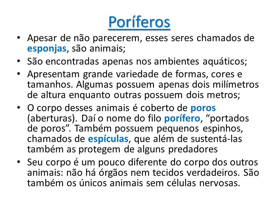 Poríferos Apesar de não parecerem, esses seres chamados de esponjas, são animais; São encontradas apenas nos ambientes aquáticos; Apresentam grande va