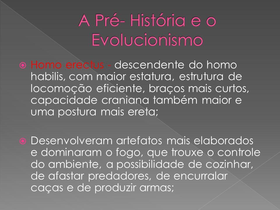 Homo erectus - descendente do homo habilis, com maior estatura, estrutura de locomoção eficiente, braços mais curtos, capacidade craniana também maior