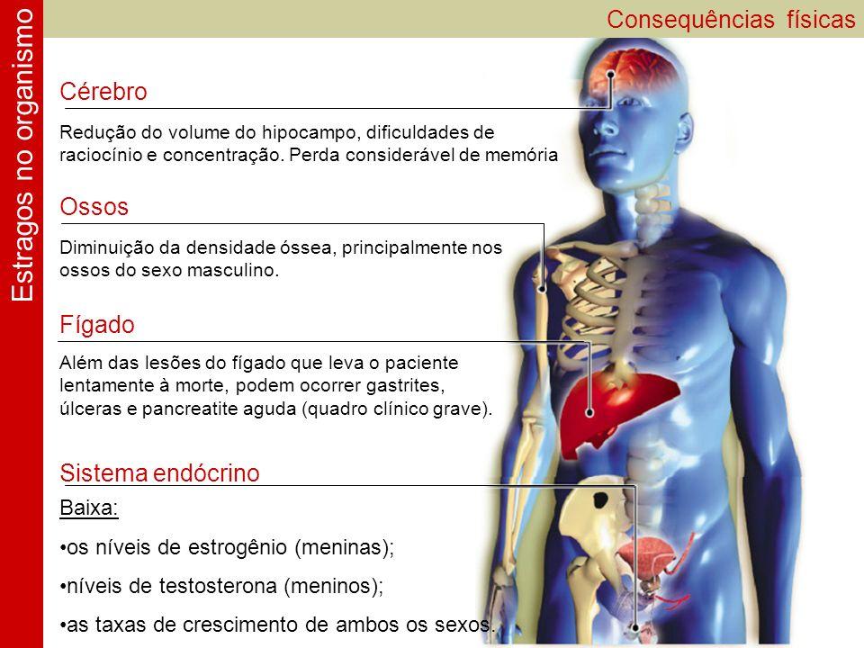 Consequências físicas Estragos no organismo Ossos Diminuição da densidade óssea, principalmente nos ossos do sexo masculino. Sistema endócrino Baixa: