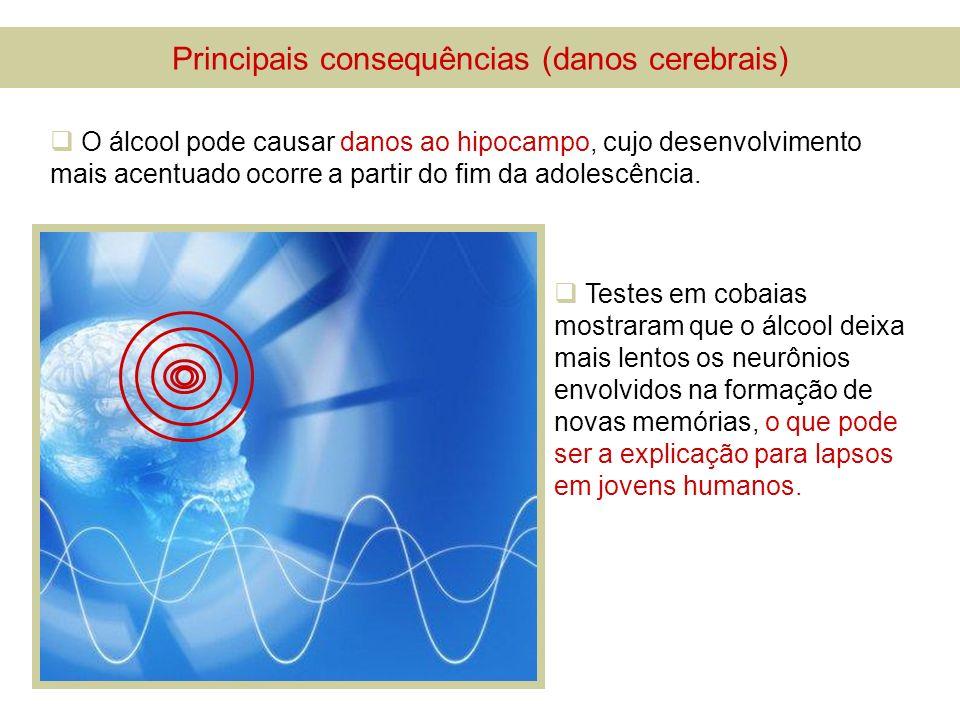 Principais consequências (danos cerebrais) O álcool pode causar danos ao hipocampo, cujo desenvolvimento mais acentuado ocorre a partir do fim da adol