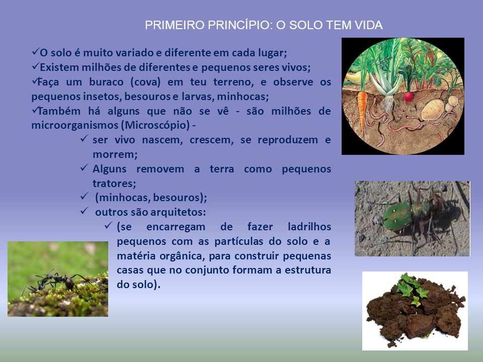 PRIMEIRO PRINCÍPIO: O SOLO TEM VIDA O solo é muito variado e diferente em cada lugar; Existem milhões de diferentes e pequenos seres vivos; Faça um bu